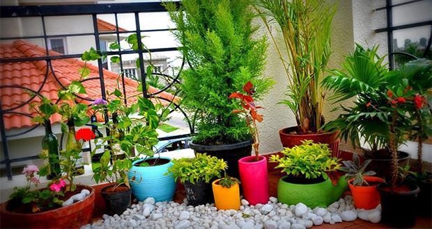 Як прикрасити балкон квітами