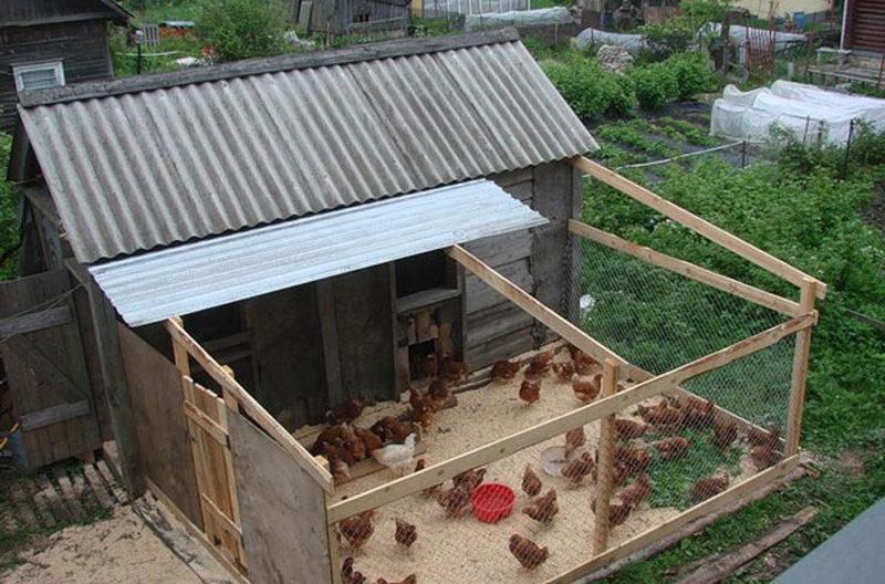 Що потрібно знати при будівництві курника?