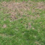 49258 Залисини на газоні: причини та оновлення